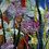 Thumbnail: Starflowers