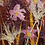 Thumbnail: Pink Flowers on a Wine Background