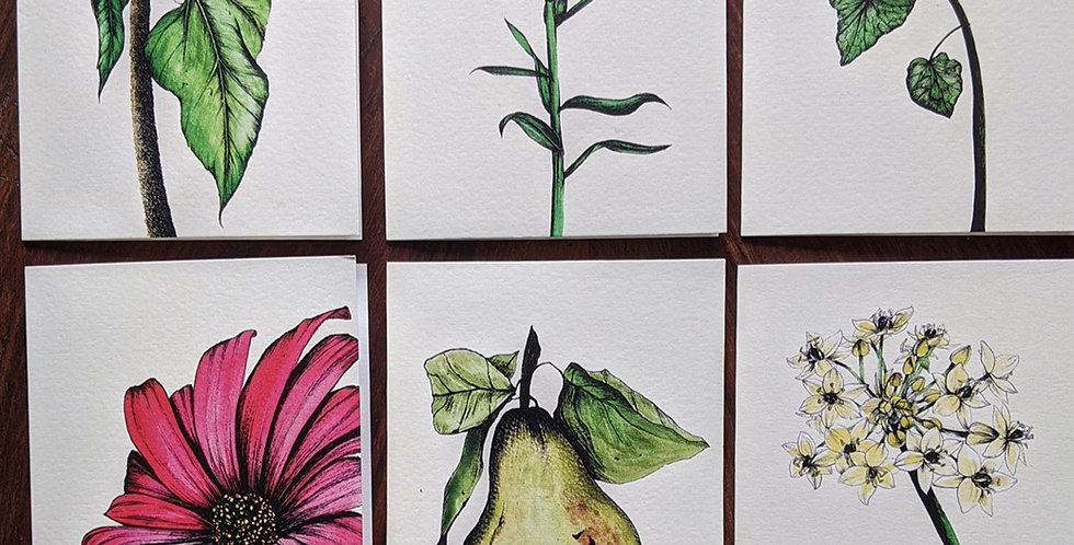 Pack of Botanical Greetings Cards