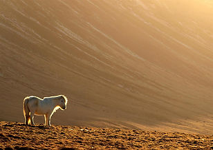 White horse (Large).jpg