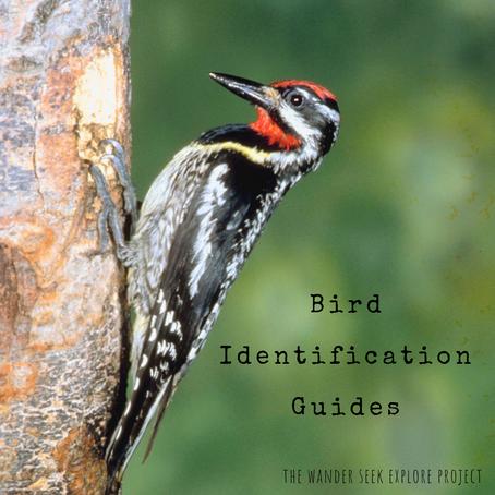 Bird Identification Resources