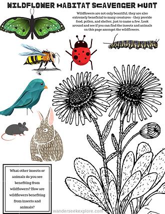 Wildflower Habitat Scavenger Hunt.png