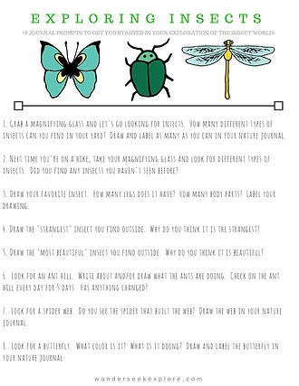 Wander Seek Explore | Free Printable | Exploring Insects | Nature Journal Prompts | Nature Studies | Homeschool Resources