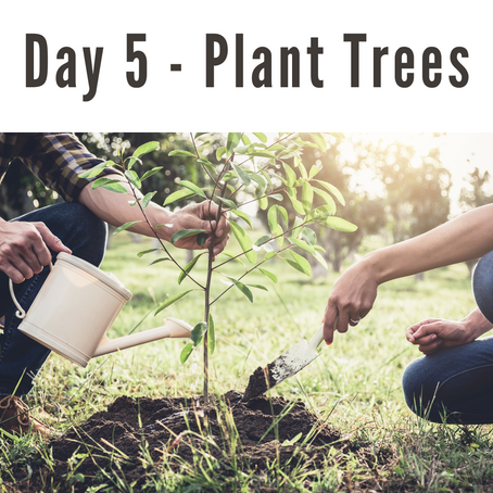 Day 5   41 Days of Eco-Conscious Living