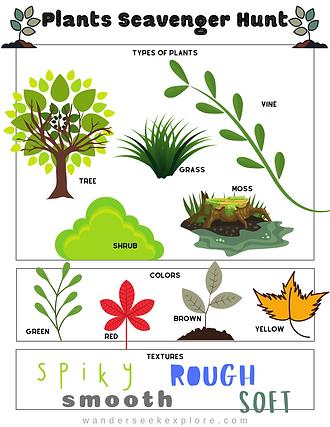 Plants Scavenger Hunt.png