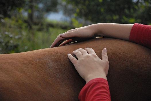 shiatsu chiens chevaux soins