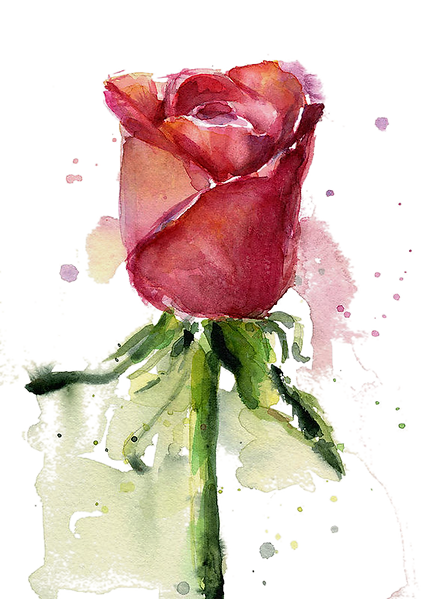rose-watercolor-olga-shvartsur_edited_ed