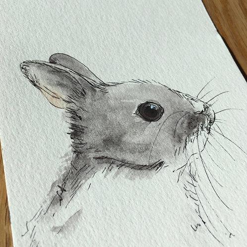 Bright Eyes Rabbit May 19th