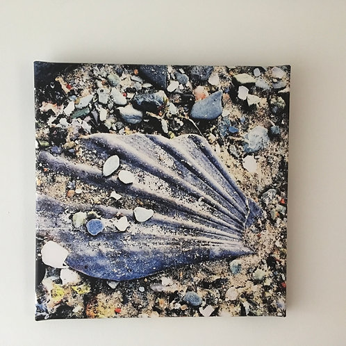 Shell Med Canvas