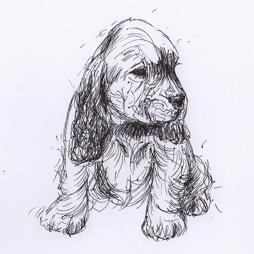 Mini Original Spaniel Puppy