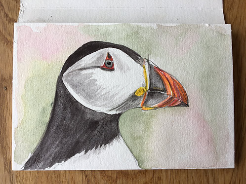 Puffin May 15th