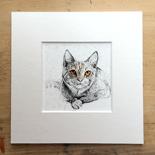 Solo Amber Eyes Cat Print