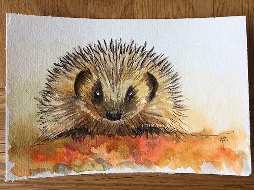 Hedgehog May 11th