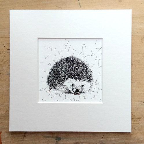 Solo Hedgehog Print