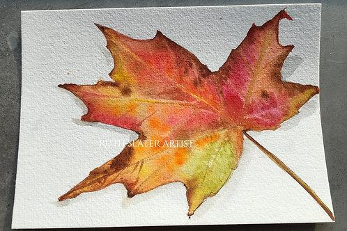 Fallen Autumn Leaf May 30th