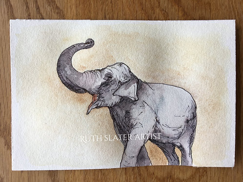 Trumpeting elephant May 9th Original watercolour postcard