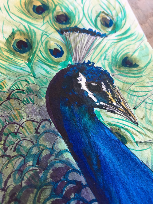 Peacock May 25th