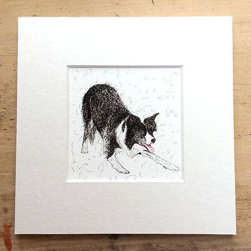 Solo Crouching Collie Print