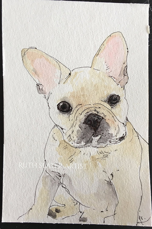 French Bulldog Puppy May 6th