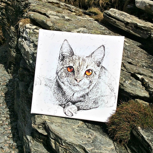 Solo Wire Work Cat Canvas