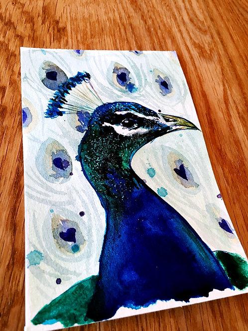 Proud Peacock May 25th