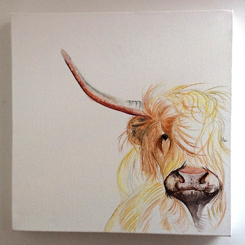 Highland Cow Box Canvas (Colour)