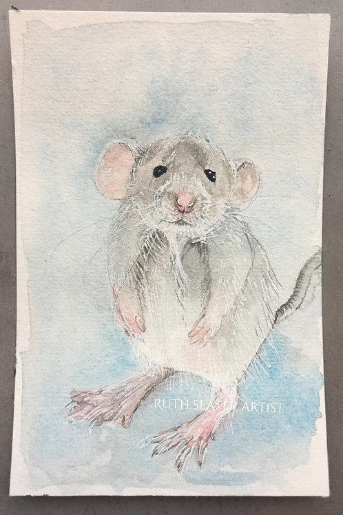 Mouse (Bonus May 20th)