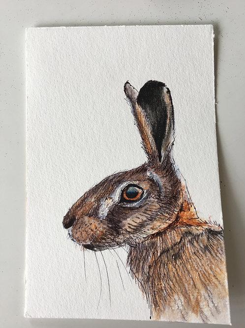 Original Hare Watercolour Postcard May 8th