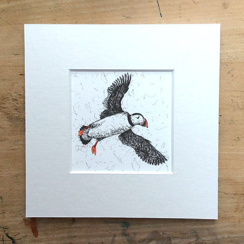 Puffin in Flight mounted Print