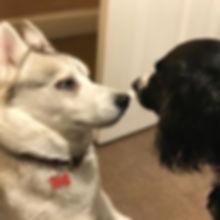 Doggy Daycare Harlow