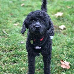 Dog Walking Sawbridgeworth