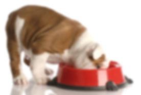raw dog food supplier harlow