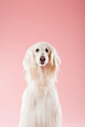 Dog Grooming Services - K9Koncepts
