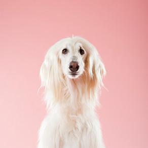 God's Dog by Robert Allen