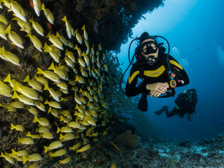 Divers share how Covid-19 has rocked their world.