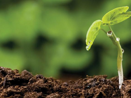 OUR SOIL, OUR FUTURE