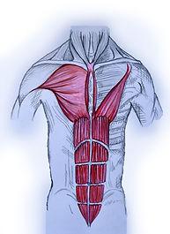 shiatsu el recto abdominal