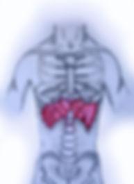 shiatsu el diafragma