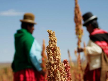 Quinua, quínoa o quinoa