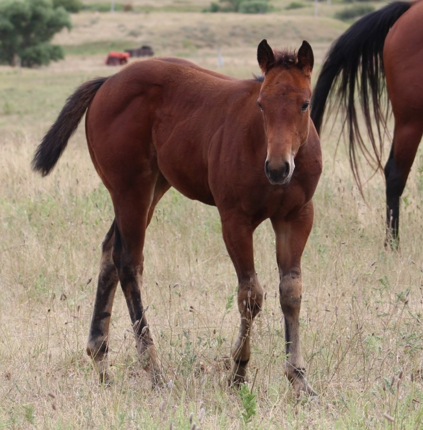 2020 Bay Filly