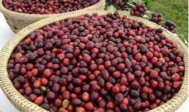 redcherrycoffee