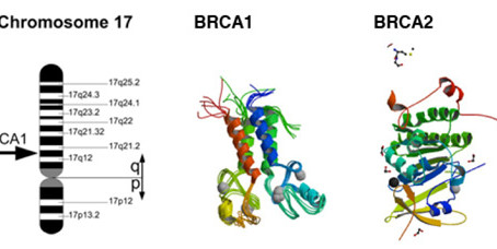 BRCA1 o BRCA2: Pruebas de cáncer hereditario para cáncer de mama y ovario