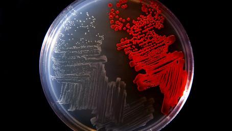 Creada la primera forma de vida inmune a los virus