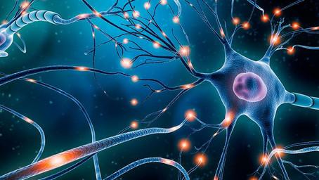 Descubren un vinculo entre el Parkinson y los ritmos circadianos.