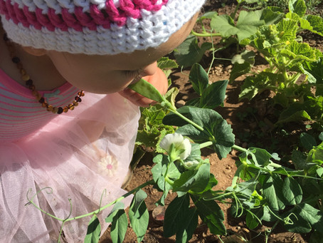 Why Organic Isn't Enough Anymore