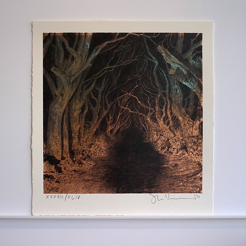Dark Hedges XXXVIII