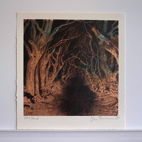 Dark Hedges XXIII