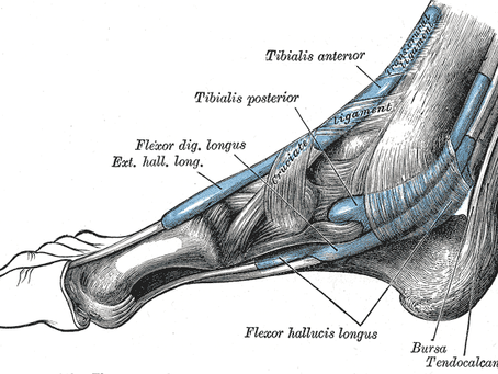 The key leg injuries...Tibialis posterior muscle