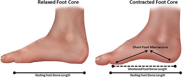 Foot core short foot.jpg