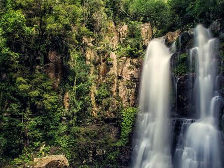 Minnamurra Rain Forest